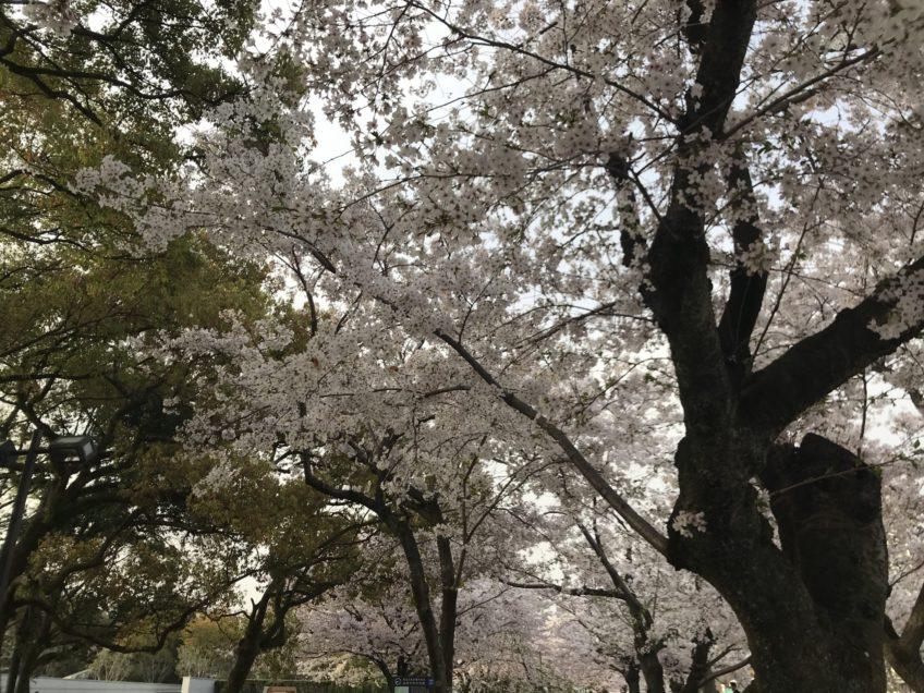 4月7日(水)プラクティクス(練習)