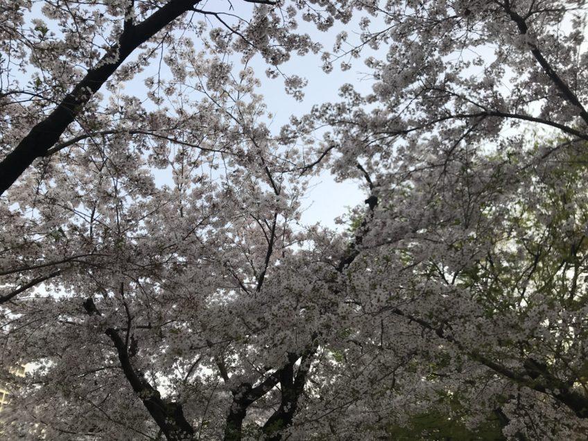 4月9日(金)プラクティクス(練習)
