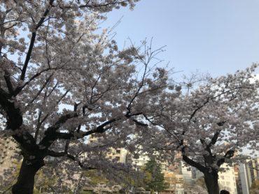 4月6日(火)プラクティクス(練習)